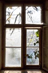 Fenster (hilarius.at) Tags: spinnweben bltter sonnenlicht sigma50mmf14art