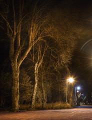 Trees in the streetlight (sidibousaid60) Tags: trees dark night streetlights noflash longexposure buxton derbyshire uk