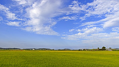 Landscape (Johnnie Shene Photography(Thanks, 2Million+ Views)) Tags: landscape scenic scenery clouds cloudscape wideangle longdistance summer day nature natural wild country countryside rural local gimpo travel destination landmark attraction korea korean incheon interesting awe wonder blue sky skyline photography horizontal outdoor colourimage fragility freshness nopeople tranquility ricefield cerealfield grainfield field ground farm farmland farming peace calm canon eos600d rebelt3i kissx5 sigma 1770mm f284 dc macro lens