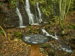 La mesa mas bonita del mundo (la_magia) Tags: naturaleza paz relax agua aguadeseda hayedo bosque otoo cascada fervenzadobeiro hayedodebusmayor bierzo busmayor espaa lamesamasbonitadelmundo len