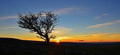 ystradfellte sunrise EXPLORED (neath stan the man[on a break]) Tags: breconbeacons wales cymru lonetree sunrise wfc