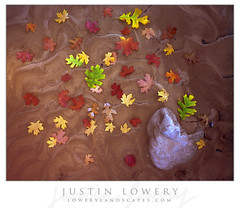 Zion's Palette (Justin Lowery) Tags: largeformat film fujifilm fuji fujichrome analog viewcamera intrepid 4x5 fieldcamera zionnationalpark zion fallcolor autumn leaves colorful mud wash scan v700 epson