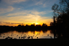 On Golden Pond (microwyred) Tags: pond sunset landscapes clouds
