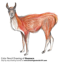 Guanaco with Color Pencils (drawingtutorials101.com) Tags: guanaco lama guanicoe camelid camels animals wild sketching pencil sketch sketches drawing draw speeddrawing timelapse timelapsevideo coloring color how