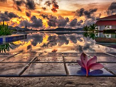 IMG_9769 ~ bunga layu di pagi hari [explore November 24, 2016] (alongbc) Tags: langkawi dayangbayhotel kuah kedah malaysia travel places trip swimmingpool reflection clouds sky sunrise flower canon eos700d canoneos700d canonlens 10mm18mm wideangle visitlangkawi tourismlangkawi lada