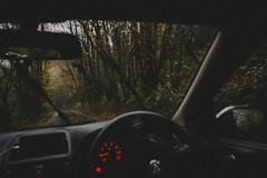 Grey Days (FelixRS) Tags: woods travel 4x4 explore nature tree trees forest forests road roads dark rain wet gloom gloomy natural light lighting sun sunset dusk green car interior