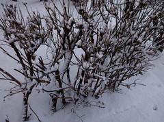 P61201-170831 (xaskixarf) Tags: зима улица winter outdoor