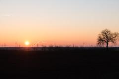 Sonnenuntergang (hinter dem Feld) (JBsLightAndShadow) Tags: heidelberg nikon nikond750 d750 tamron tamronsp2470mmf28divcusd dezember december winter 2016 winter2016 dmmerung abenddmmerung sonnenuntergang sonne baum bume feld felder dawn sunset sun tree trees field fields