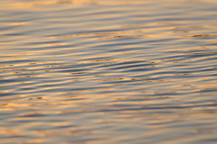 Ripples 24 (josullivan.59) Tags: 2016 lakeontario tamron150600 toronto evening goldenhour lake nature ripples surfacetension water ontario orange outside october wallpaper 3exp reflection texture yellow pattern artisitic abstract sunset day detail light canon6d canada blur naturallight waves beaches