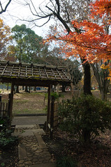 20161204-DS7_6527.jpg (d3_plus) Tags:  a05 wideangle d700 thesedays  architecturalstructure   kanagawapref   sky park autumnfoliage  japan   autumn superwideangle dailyphoto nikon tamronspaf1735mmf284dild  street daily  architectural  fall tamronspaf1735mmf284dildaspherical touring streetphoto  nikond700 tamronspaf1735mmf284 scenery building nature   tamron1735   tamronspaf1735mmf284dildasphericalif   autumnleaves