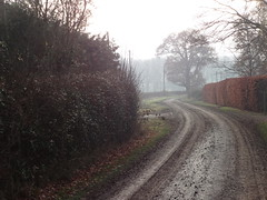 (ART NAHPRO) Tags: misty foggy mist fog etchingham sussex rural weal wealden winter december 2016 trees lane
