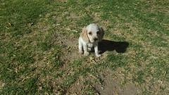 Arequipa - Molino de Sabandía (Santiago Stucchi Portocarrero) Tags: arequipa perú santiagostucchiportocarrero perro cane can dog hound chien sabandía hund