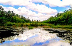 triangulos (rubensdosanjos) Tags: green water natureza natural tree nature tringulo samsung