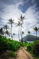 The Path to Makapuu Beach! (Mardi Labuguen) Tags: beach hawaii oahu outdoor honolulu makapuu shorebreak makapuubeach