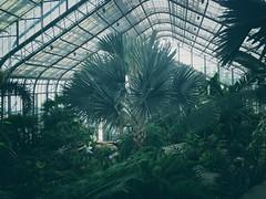 Lauritzen Gardens, Omaha NE. (_komorebi) Tags: plants garden nebraska moody dream dramatic atmosphere conservatory scifi tropical omaha atmospheric hothouse lauritzen