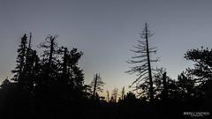 Amanecer (berth_canizales) Tags: sunrise san arboles paisaje pedro ensenada martir