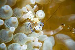 20150816-DSC_6952.jpg (d3_plus) Tags: sea sky fish beach japan scenery underwater diving snorkeling  shizuoka    apnea izu j4  waterproofcase    skindiving minamiizu       nikon1 hirizo  1030mm  nakagi 1  nikon1j4 1nikkorvr1030mmf3556pdzoom beachhirizo misakafishingport  1030mmpd nikonwpn3 wpn3