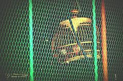 Net (Y's Photo moment) Tags: bird net freedom nex nex3n