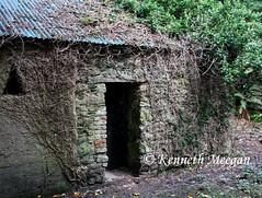 Old Cottage, Tintern Wood (Ken Meegan) Tags: ireland cottage oldcottage tinternabbey cowexford saltmills tinternwood