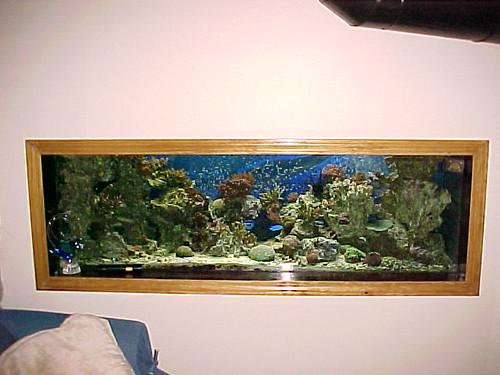 150 gallon reef