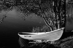Under the tree (explore) (Antti Tassberg) Tags: blackandwhite bw tree monochrome lens 50mm prime boat explore puu vene 460 järvi lohi