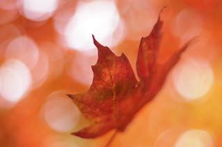 Bokeh d'automne 9