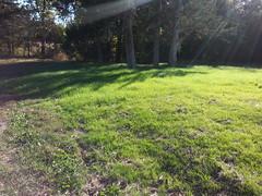 Sagan Spring Grass Cover Crop (NerdAcres) Tags: grass spring cover crop sagan 2015 terraforming