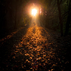 Autumn Fantasy : The Path To The Light (Gilderic Photography) Tags: autumn light forest automne way square lumix woods shadows darkness belgium belgique belgie path ombre panasonic lumiere liege bois gilderic lx3 dmclx3