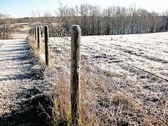 Frosty Fence (erykah36) Tags: trees winter red sky brown white snow canada cold green nature field grass fence landscape woods frost open bright snowy farm bare frosty clear wires alberta carvel barbwire priaires