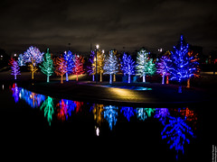 Vitruvian Lights 2015-8 (MikeyBNguyen) Tags: us texas unitedstates christmastree christmaslights christmastrees addison vitruvianpark vitruvianlights