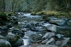 Salmon River (Jon David Nelson) Tags: trees oregon sandy salmon conservation nationalforest rivers mthood habitat dodgepark cascademountains mthoodnationalforest salmonrivertrail sandyrivergorge salmonriversandyrivermthooddouglasfiroldgrowth