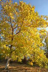 e toamna in burgul meu si-i pace (dorin tudori) Tags: autumn tree herbst romania toamna landschaft baum copac oravita carasseverin