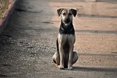 Sokak Dostlar (thehayvan) Tags: street pets can mama ilgi sevgi streetdogs hayvan streetcats destek yardm sokakhayvanlar