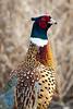 South Dakota Luxury Pheasant Lodge - Gettysburg 46