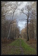 Au bout de l'alle... (DavidB1977) Tags: france 50mm nikon arbre iledefrance fort alle valdemarne d7100 boissysaintlger grosbois