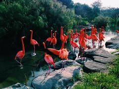 (junniorkopke) Tags: biopark temaiken temaikèn