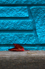A colourful end (James_D_Images) Tags: red leaf autumn fall foliage fallen sidewalk blue wall
