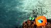 Platges que són piscines (lluiscn) Tags: cala platja beach playa manguitos flotador aigua transparent sorra arena agua turqueta menorca illes illa island balears mediterrani mediterrània mediterraneo ones olas roca piedra
