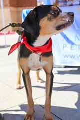 dudleywalker-6033 (angelsrescue) Tags: aau pets angels among us pet rescue alpharetta ga dog love