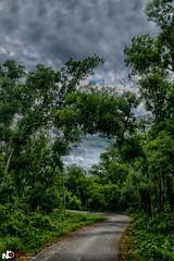 Road to Khagrachari . ( Chittagong,Bangladesh ) (Jams Nabil) Tags: tree nature road beauty chittagong bangladesh flickr explore photography canon photographer ngc