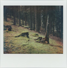In The Spruce Forest 24 (sycamoretrees) Tags: analog colorspectra colorspectra201506 film forest impossible instantfilm integral integralfilm marianrainerharbach polaroid spectra spruce treestump trees