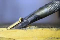 Chisel Edge n Wood Chip ( Explore on 2016-10-17 # 19) (Zahidur Rahman ( Will be back soon )) Tags: macro macromonday chisel metal tool wood chips action cutting brown yellow steel woodchips surface composition theme edge hmm carpenter outdoor
