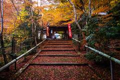 momiji '16 - autumn foliage #2 (Yamashina Seiten shrine, Kyoto) (Marser) Tags: xt10 fuji raw lightroom japan kyoto yamashina shrine autumnleaves fallenleaves gate staircase autumn red