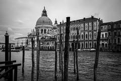 grand canal (Blende1.8) Tags: canalgrande grandcanal venice venedig venezia laguna lagune wasser water fineart monochrome mono monochrom santamariadellasalute kirche church