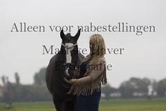 15 oktober 2016-66-2 (MZorro4) Tags: mariekehaverfotografie oudesluis schagen paardenfotografie portretfotos rijden wwwmariekehaverfotografienlpaarden
