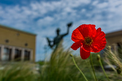 Poseidon (Pasi Mammela) Tags: gteborg gothenburg sweden sverige flowers sky summer