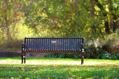 Autumn in the Park (CCphotoworks) Tags: scenic leaves community urban parks outdoors bench parkbench autumn