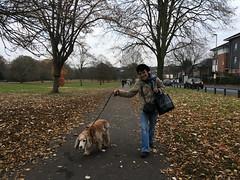 Espe and Max (jovike) Tags: animal autumn barnet dog eastbarnet espe leaf london park tree woman