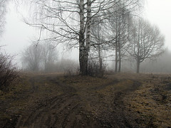 the sound of silence (Sergey S Ponomarev - very busy) Tags: sergeyponomarev canon 70d eos ef24105f40l nature natura landscape paysage paesaggio birch woods forest fog spring dark silence path road trails silhouettes 2016 aprile april               mystery kirov vyatka wjatka russia russie russland north nord europe