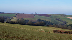 Countryside in February (sallyclarkephotos) Tags: countryside crops cereals earlyspring